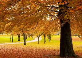 秋のイメージ写真